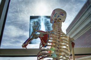 Depende la salud muscular de los mismos factores que la salud ósea